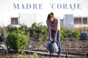 """GRA325. JEREZ DE LA FRONTERA, 16/10/2013.- Una voluntaria de la ONG Madre Coraje trabaja en el """"Huerto Solidario"""" donde 35 personas, cultivan desinteresadamente unos huertos solidarios con los que, de momento, han recolectado cerca de 17.000 kilos de verduras y hortalizas que han entregado a entidades benéficas y comedores sociales. EFE/Román Ríos."""